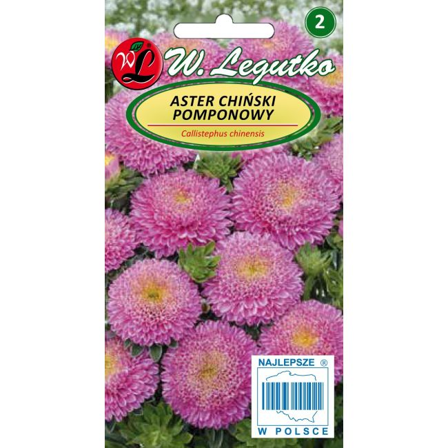 Aster chiński pomponowy - różowy