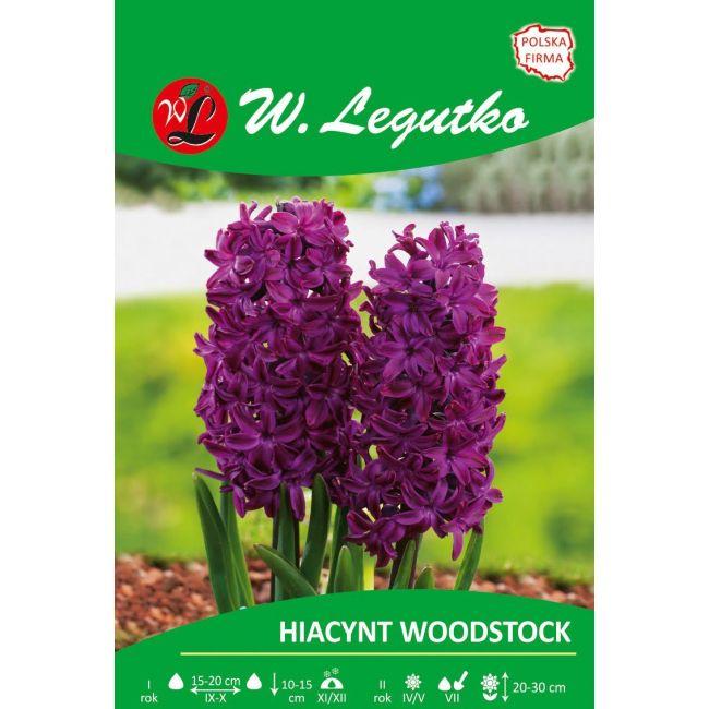 Hiacynt - Woodstock - purpurowy