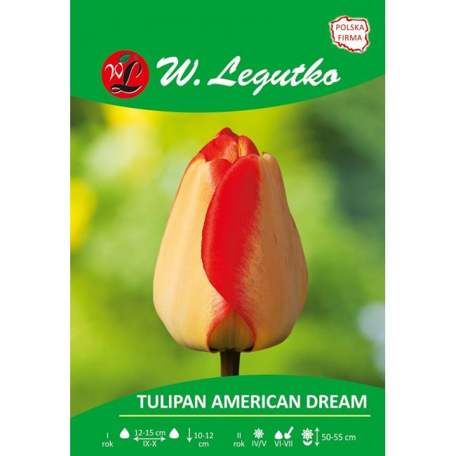 Tulipan American Dream