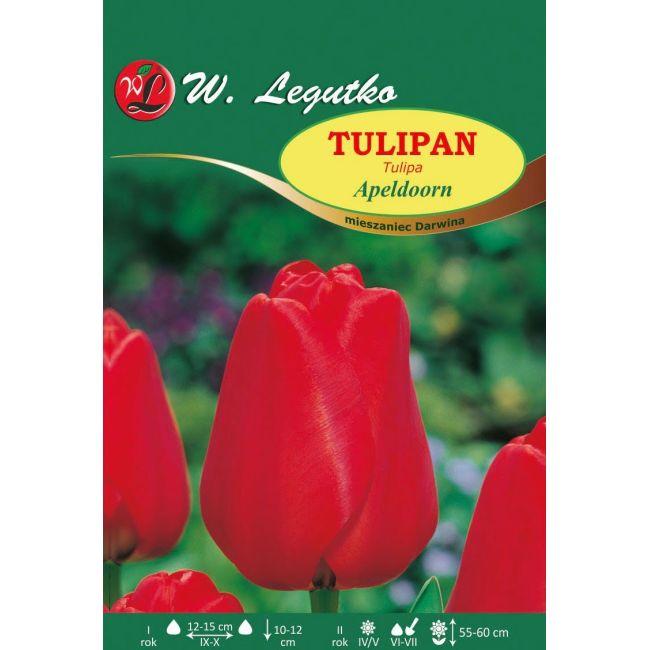 Tulipan Apeldoorn