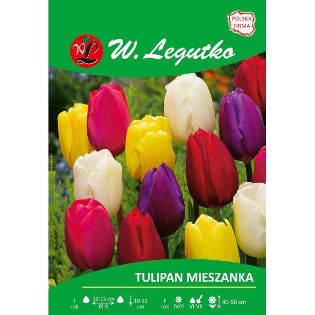 Tulipan Triumph - mieszanka kolorów