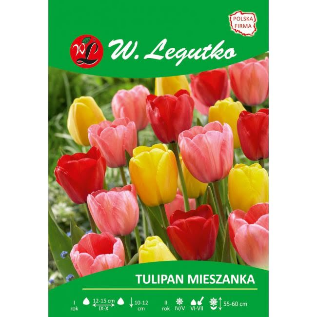 Tulipan - mieszanka kolorów - mieszańce Darwina