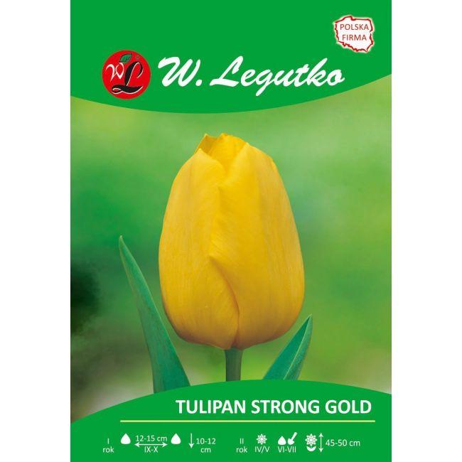 Tulipan Strong Gold