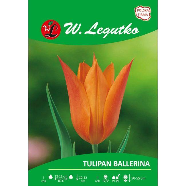 Tulipan - liliokształtny - Ballerina