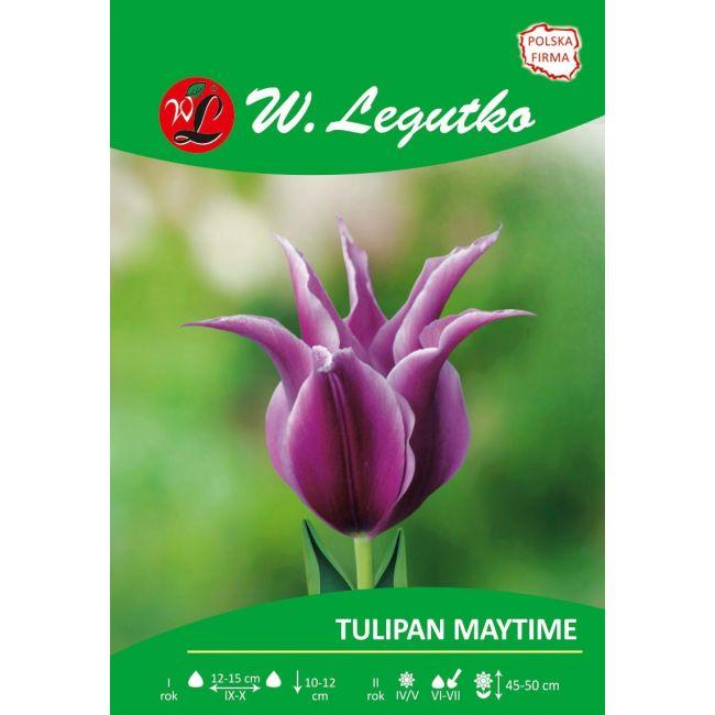 Tulipan Maytime