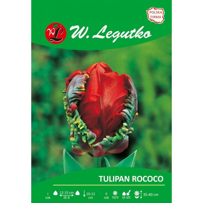 Tulipan Rococo