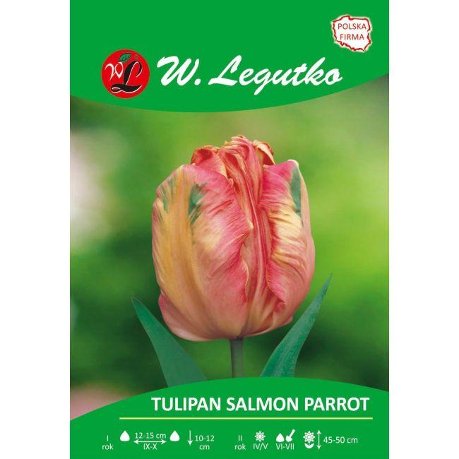 Tulipan - Salmon Parrot - Papuzi - łososiowo-różowy