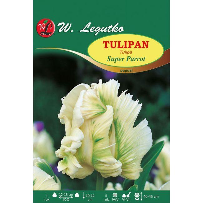Tulipan Super Parrot