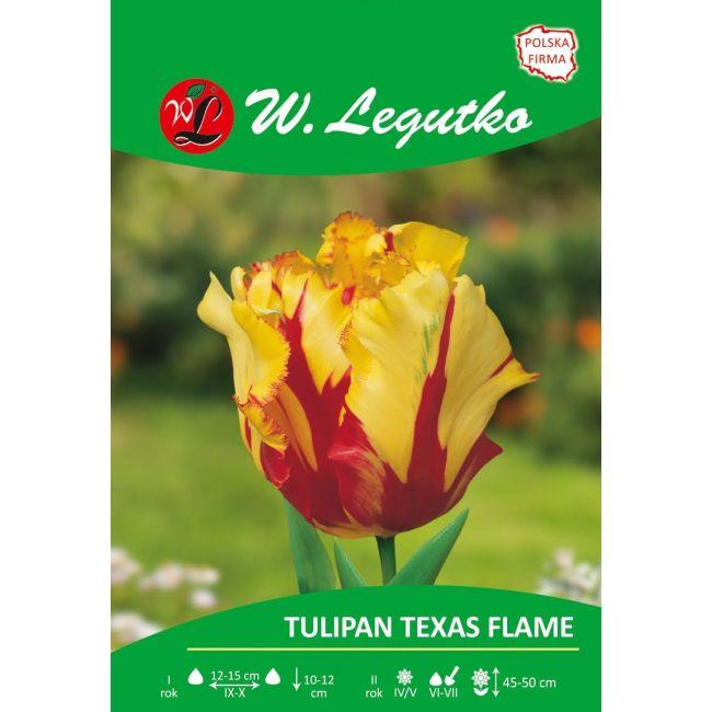 Tulipan Texas Flame