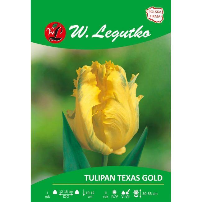 Tulipan - papuzi - Texas Gold