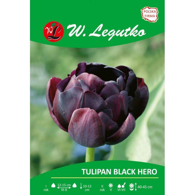 Tulipan - pełny - Black Hero