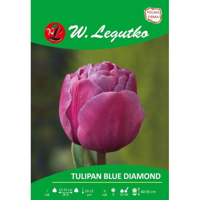 Tulipan Blue Diamond