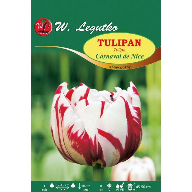 Tulipan Carnaval de Nice