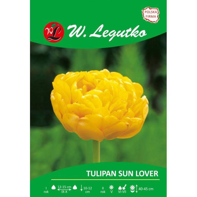Tulipan - pełny - Sun Lover