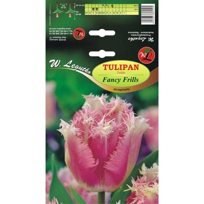 Tulipan Fancy Frills