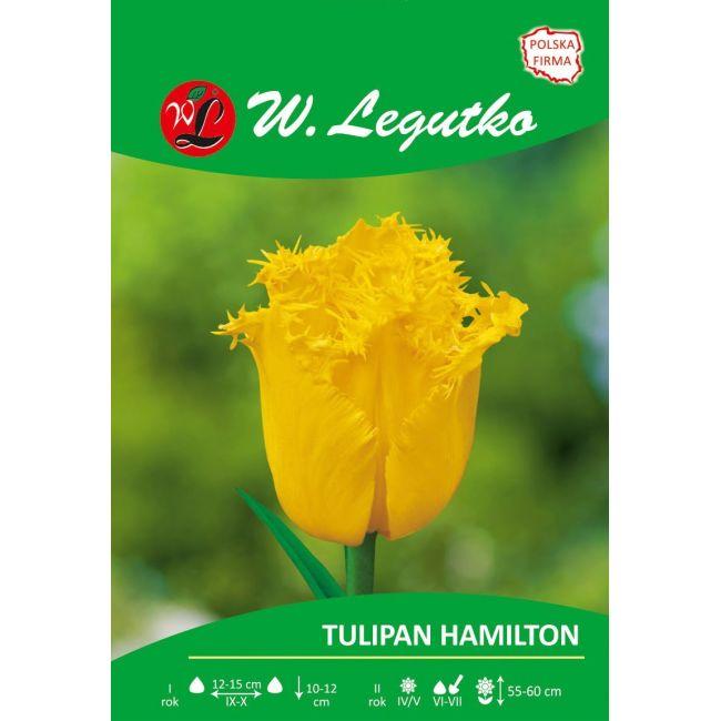 Tulipan - Hamilton - strzępiasty - żółty