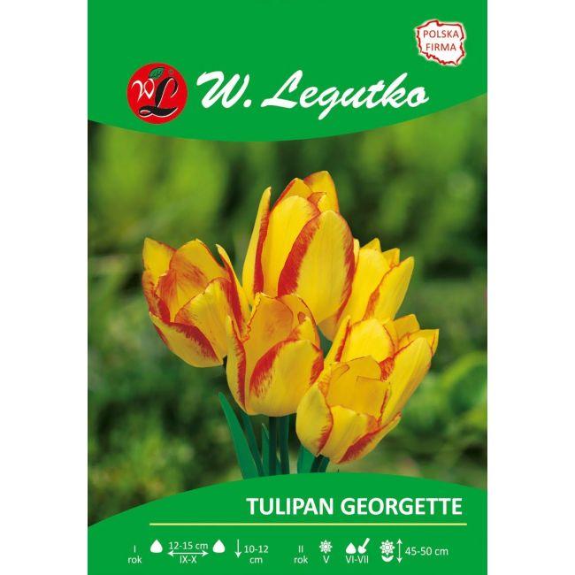 Tulipan - wielokwiatowy - Georgette
