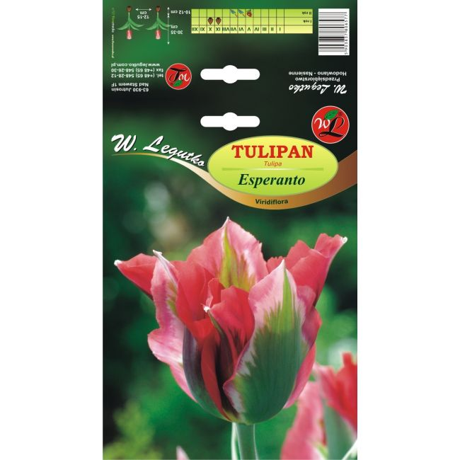 Tulipan - Viridiflora - Esperanto