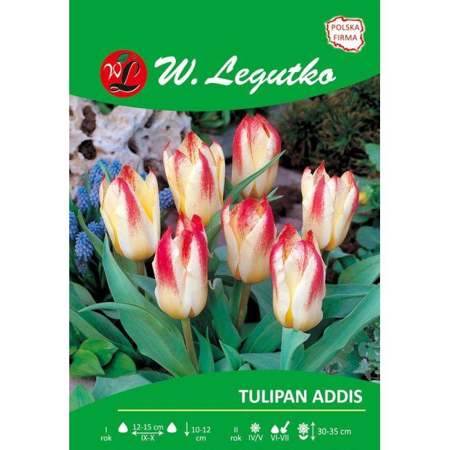 Tulipan Addis