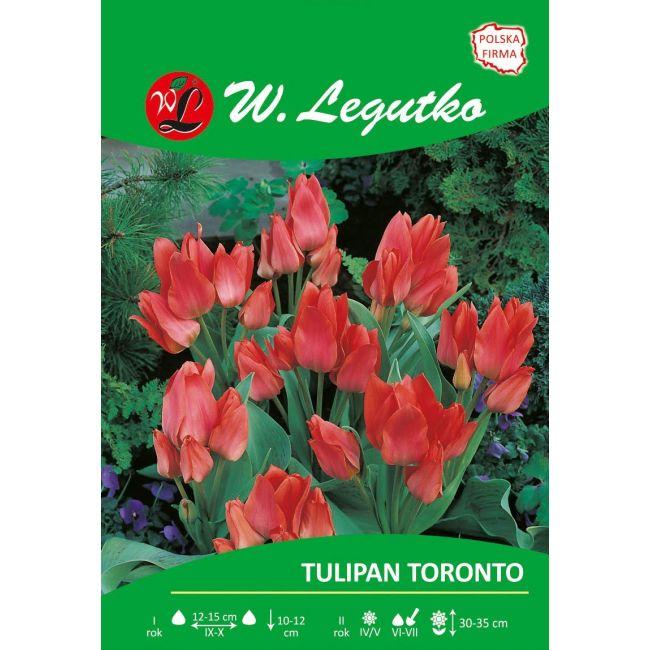 Tulipan Toronto