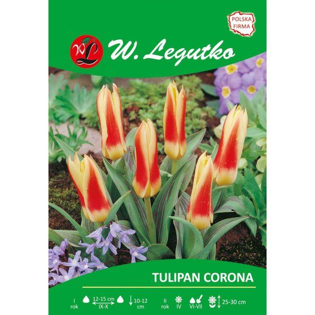 Tulipan Corona