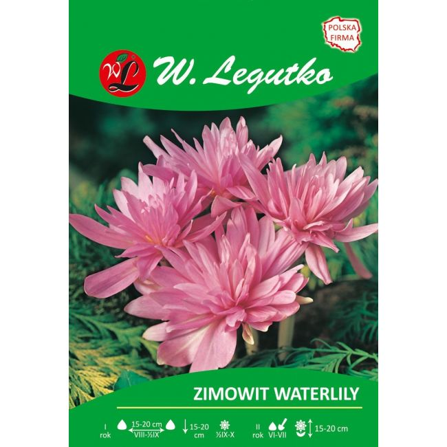 Zimowit Waterlily