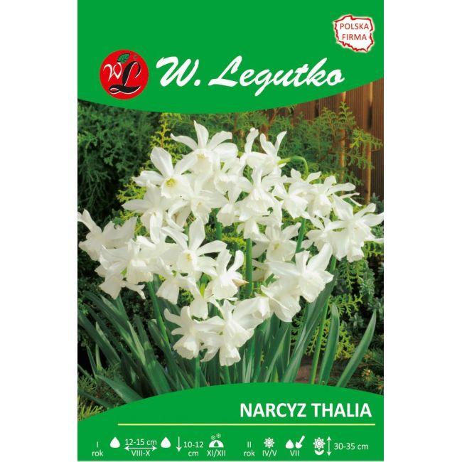 Narcyz - Thalia - Triandrus - biały