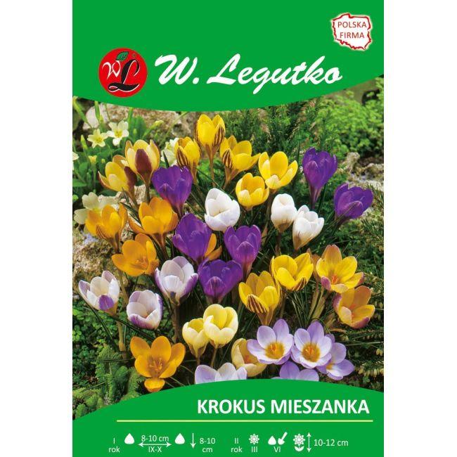 Krokus - Chrysanthus - mieszanka kolorów