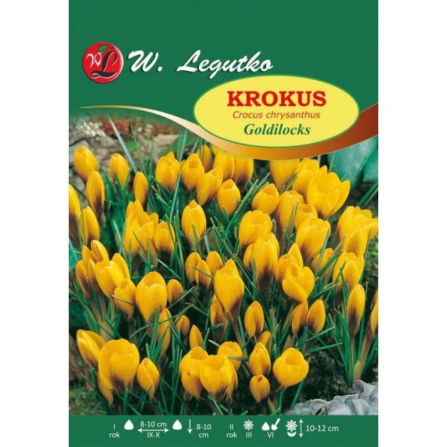 Krokus Chrysanthus Goldilocks
