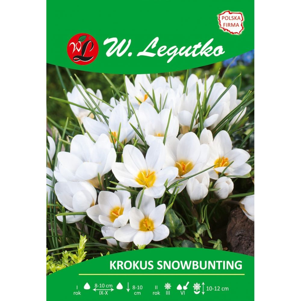 Krokus Chrysanthus Snowbunting