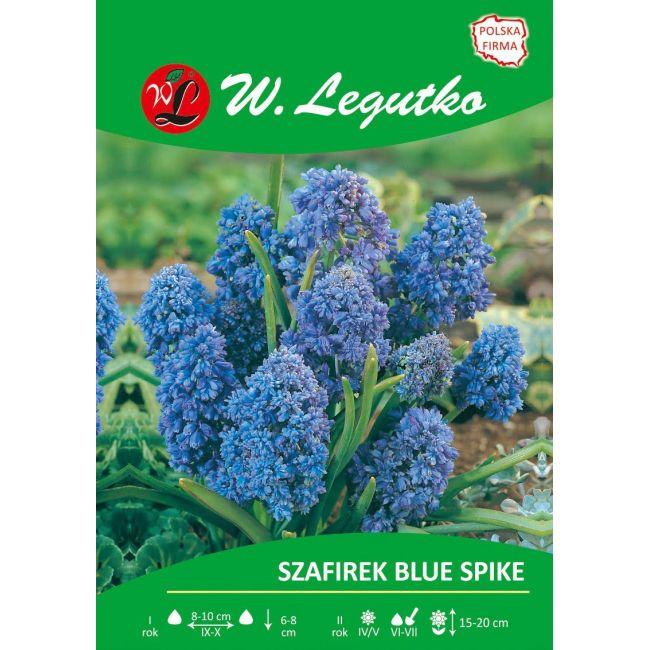Szafirek armeński - Blue Spike - pełny - niebieski