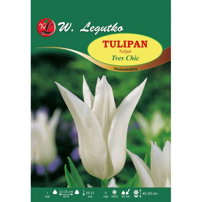 Tulipan Tres Chic