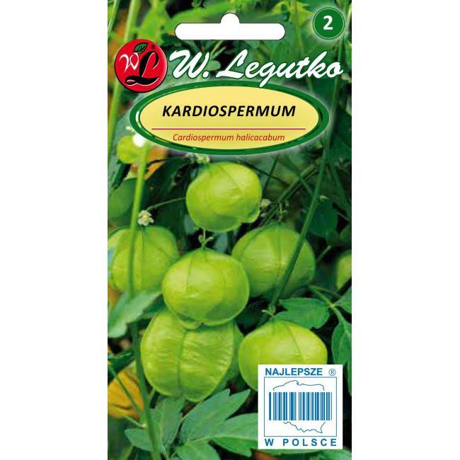 Kardiospermum - zielone owoce