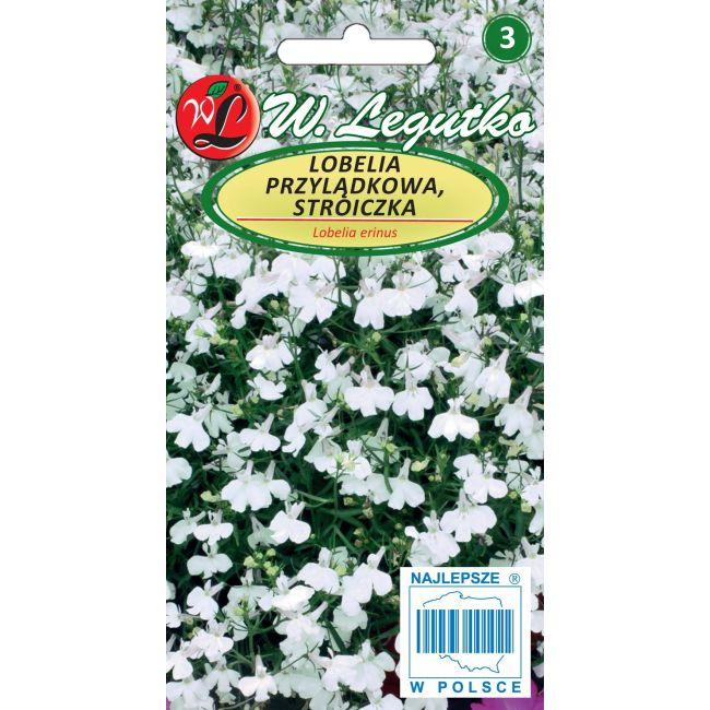 Lobelia przylądkowa, Stroiczka - biała