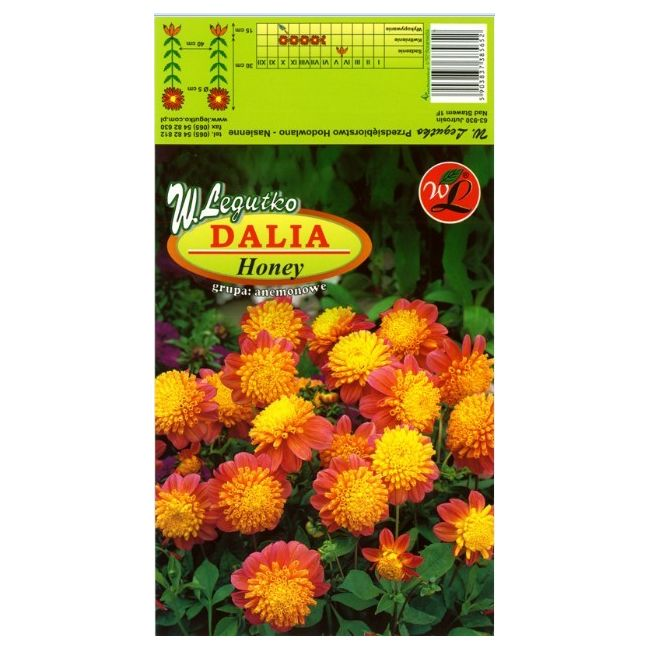 Dalia anemonowa Honey