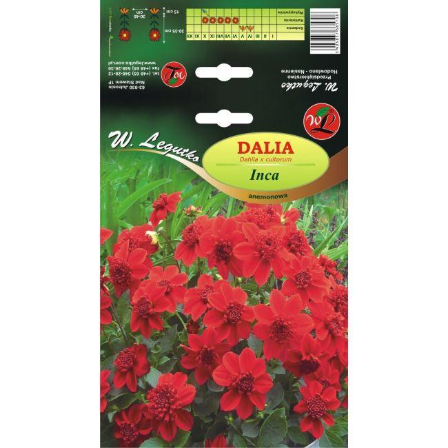 Dalia anemonowa Inca