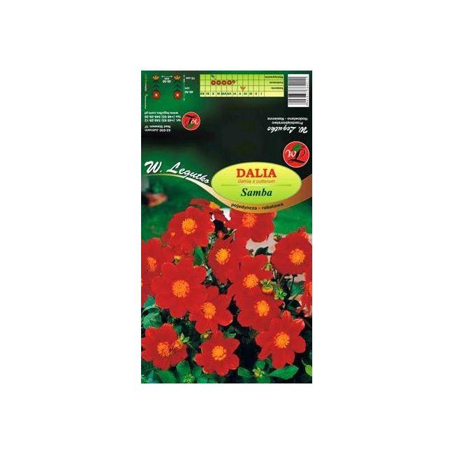 Dalia ogrodowa - pojedyncza rabatowa - Samba - czerwona