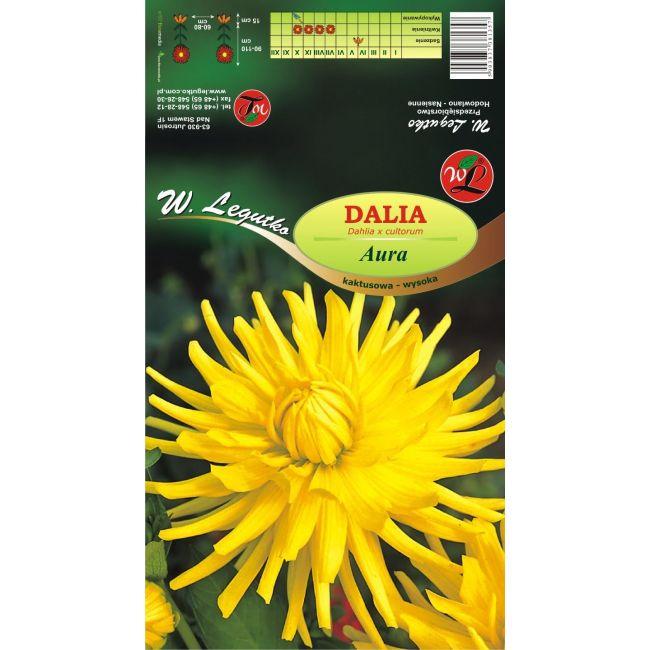 Dalia ogrodowa - kaktusowa wysoka - Aura - żółta