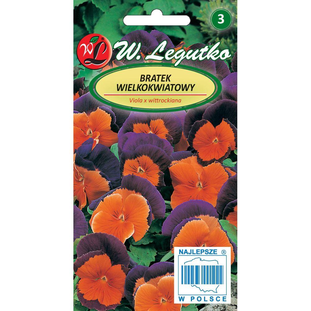 Bratek Szwajcarski wielkokwiatowy - Orange Violet
