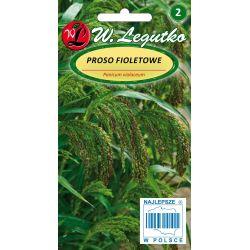 Proso fioletowe - zielone