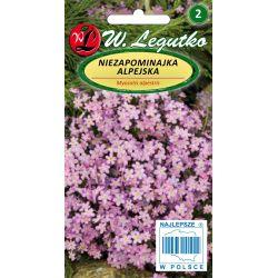 Niezapominajka alpejska - różowa