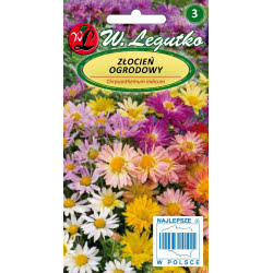 Złocien ogrodowy - mieszanka pełnokwiatowa