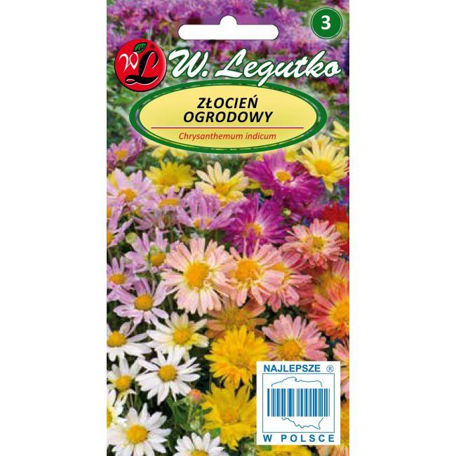 Złocień ogrodowy - mieszanka pełnokwiatowa
