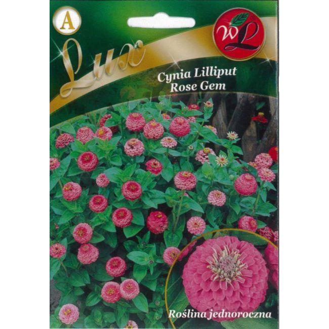 Cynia wytworna Lilliput - Rose Gem