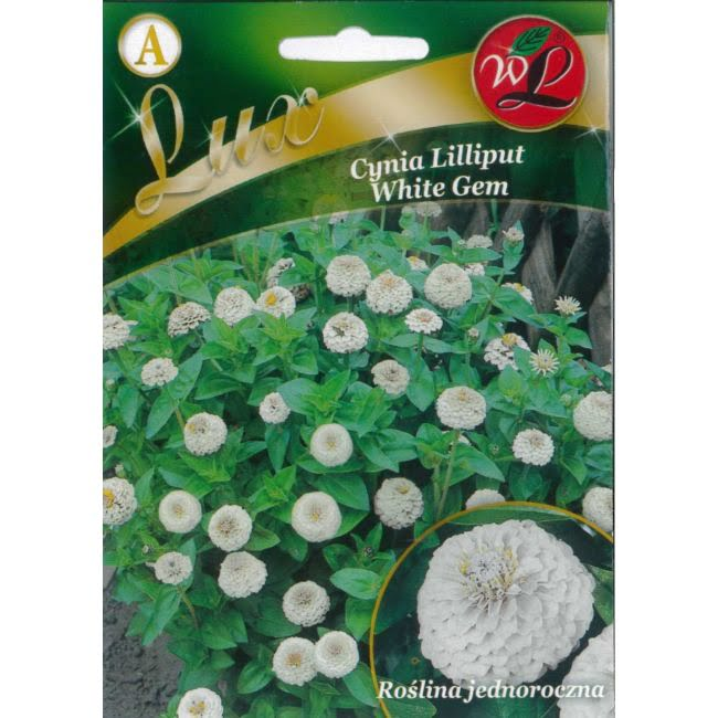 Cynia wytworna Lilliput - White Gem