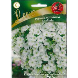 Petunia ogrodowa Kaskada - biały