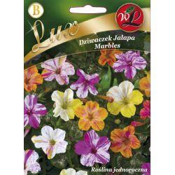 Dziwaczek Jalapa - Marbles