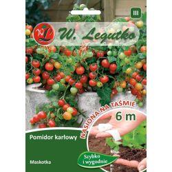 Pomidor gruntowy karłowy wiotkołodygowy - Maskotka - taśma 6m