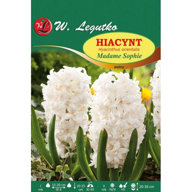 Hiacynt - Madame Sophie - pełny - biały