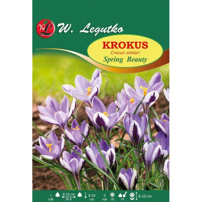 Krokus Sieberi Spring Beauty